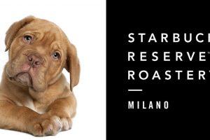 Starbucks divieto di acceso ai cani